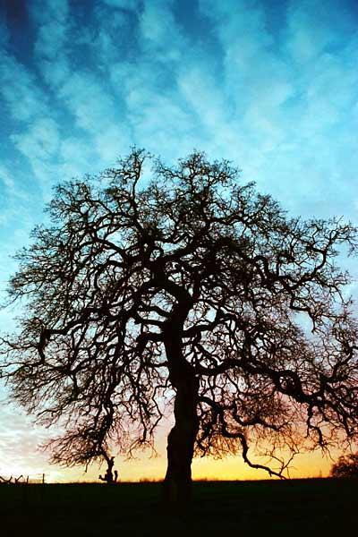 wise-tree.jpg