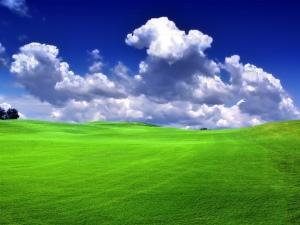 Green_Grass_Blue_Sky_Bliss