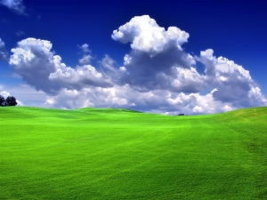 Green_Grass_Blue_Sky_Bliss